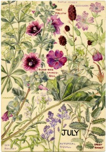 wildflowers of britain month by month by margaret e wilson
